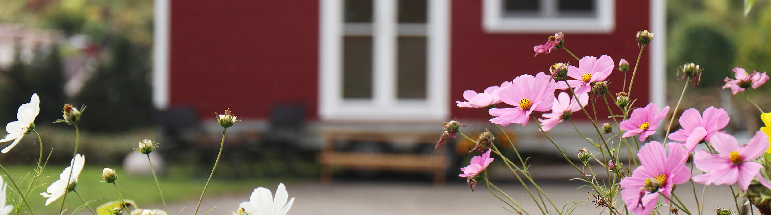 Pinke und weiße Blumen